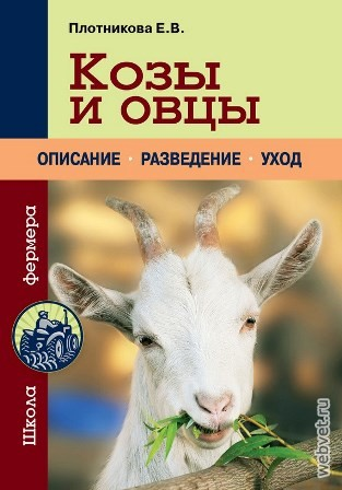 Тушинская порода овец на Всероссийской выставке овец г